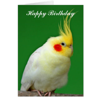 Cockatiel bird beautiful photo birthday card