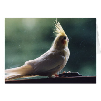 """Cockatiel"" Bird Photography Greeting Card"