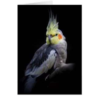 Cockatiel Card