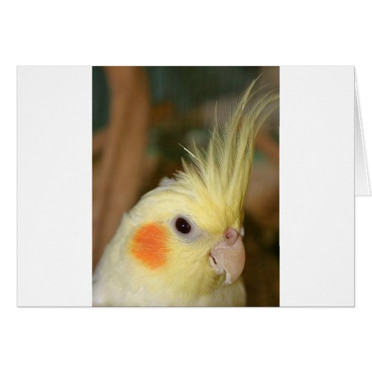 Cockatiel Cutie Card