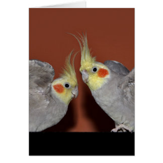 Cockatiel Duo Card