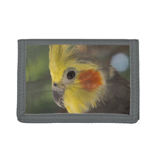Cockatiel Friendly Face Gray TriFold Nylon Wallet
