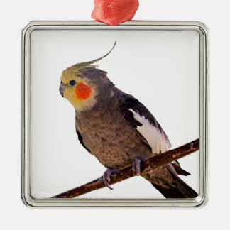 Cockatiel Gray and Yellow Pet Bird Photograph Metal Ornament