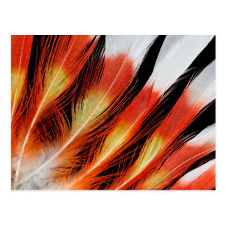 Cockatoo Feather Pattern Postcard
