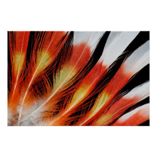 Cockatoo Feather Pattern Poster