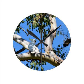 COCKATOO IN TREE RURAL QUEENSLAND AUSTRALIA CLOCK