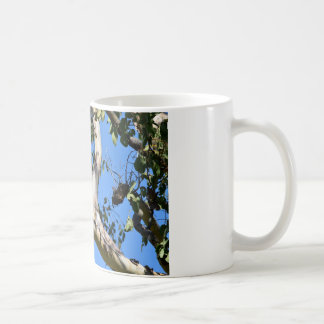 COCKATOO IN TREE RURAL QUEENSLAND AUSTRALIA COFFEE MUG
