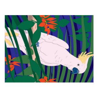 Cockatoo Postcard