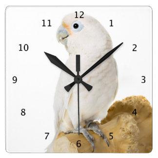 Cockatoo white parrot bird beautiful photo, gift clocks
