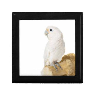 Cockatoo white parrot bird beautiful photo, gift gift box