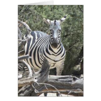 Cocked-ear zebra birthday card
