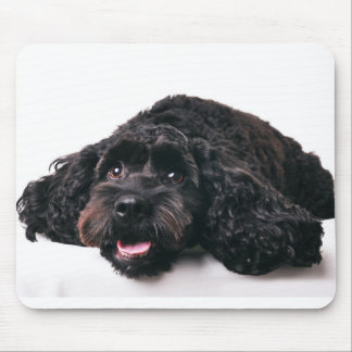 cocker poodle mix puppy  mousepad