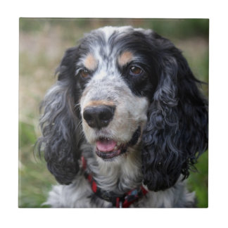 Cocker Spaniel dog beautiful tile or trivet, gift