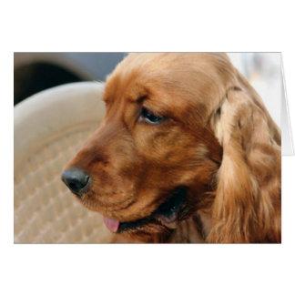 Cocker Spaniel dog Card