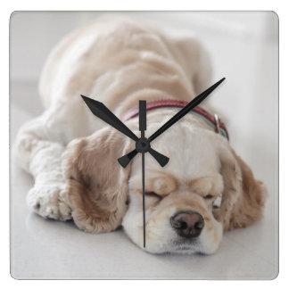 Cocker spaniel dog sleeping square wall clock
