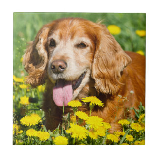 Cocker Spaniel in Yellow Flowers Tile