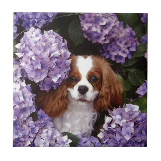 Cocker Spaniel Play With Purple Flowers Tile