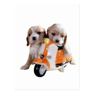 Cocker spaniel pups on moped postcard