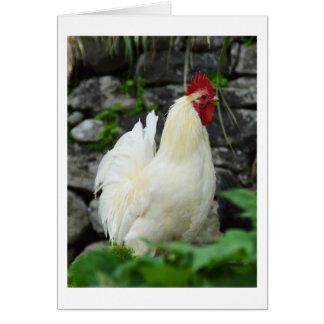 Cockerel in Madeira Greeting Card