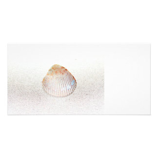 cockle shell back light seashell picture card