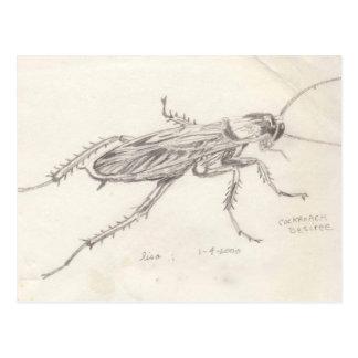 Cockroach Desiree Postcard