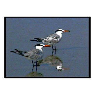 Cocoa Beach, FL 2 Birds2004~1  by jGibney  ATC ~OE Business Card Templates