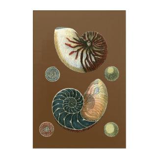 Cocoa Shell Acrylic Print