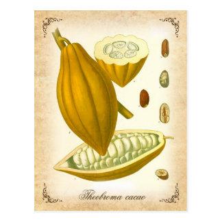 Cocoa - vintage illustration postcard