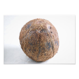 Coconut For use in USA only.) Photo Art