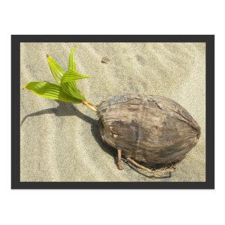 Coconut on the Beach Postcard