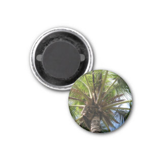 Coconut Palm Magnet