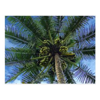 Coconut Palm Postcard