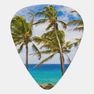 Coconut palm trees (Cocos nucifera) swaying in Guitar Pick