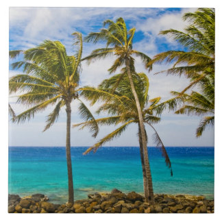 Coconut palm trees (Cocos nucifera) swaying in Tile
