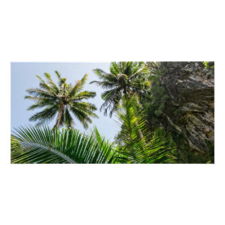 Coconut palms photo card