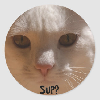 Coconut the cat--SUP? Classic Round Sticker