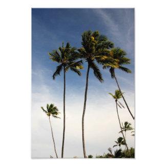 Coconut Trees Brazil Photo Print