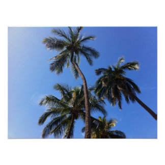Coconut Trees in Kihei, Maui, Hawaii Poster