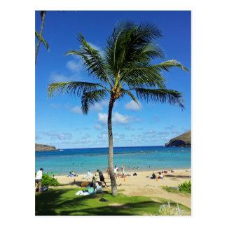 Coconut Trees Postcard