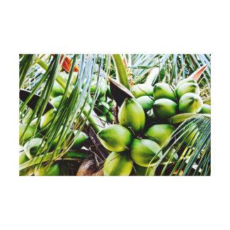 Coconuts ~ Canvas Art ~ Caribbean Fruit