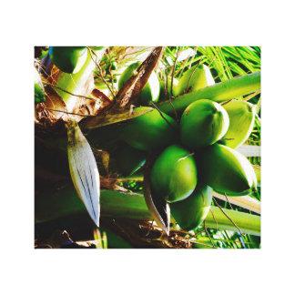 Coconuts ~ Canvas Art ~ Trinidad