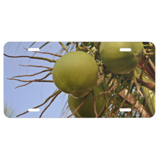 Coconuts Fruits License Plate