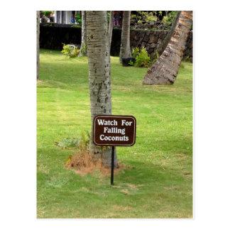 Coconuts Hawaii Warning Sign Postcard