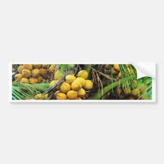 coconuts on the tree bumper sticker