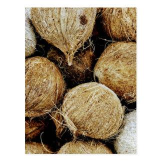 Coconuts Postcard