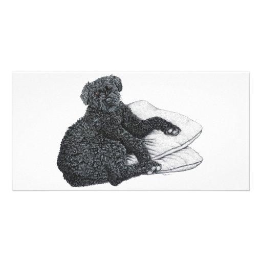 Cocotte, Belgian Sheepdog - Photo Card