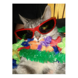 Cody has the Aloha Spirit! Postcard
