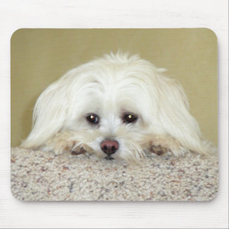 'CODY'  Sweet LittleMaltese photo at top of stairs Mouse Pad