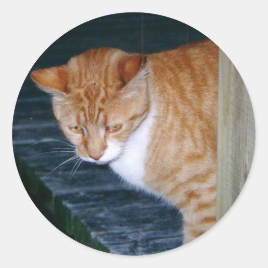 Cody the Cat Stickers