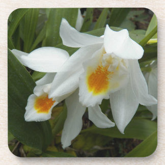 Coelogyne Orchids Floral Coaster